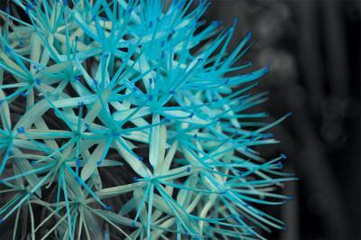 blekitny-kwiat