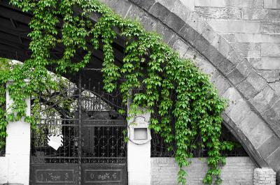 brama-i-zielone-pnacze