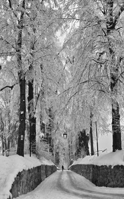 las-zimowa-pora