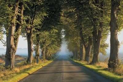 droga-pomiedzy-drzewami