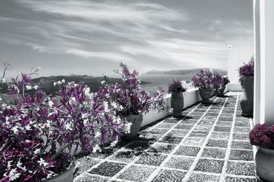 widok-z-tarasu-w-szarosci-i-fioletowe-rosliny