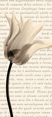 tulipan-w-sepii