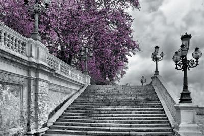 fioletowe-drzewo-i-schody