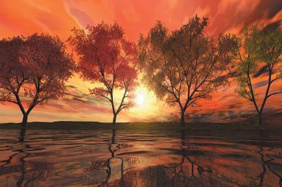 drzewa-i-zachod-slonca-nad-jeziorem