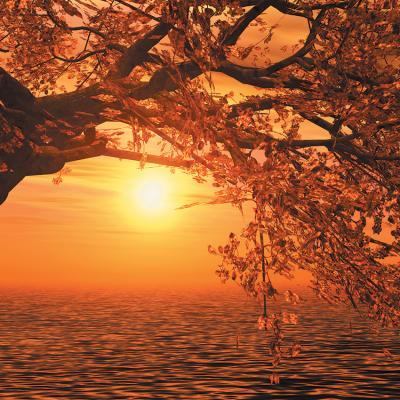 drzewo-i-zachod-slonca-na-sciane