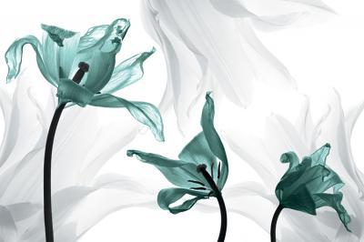 zielona-tulipany