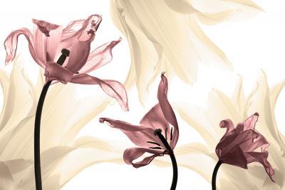 trzy-rozowe-tulipany