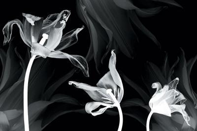 tulipany-w-negatywie