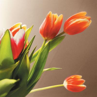 kwiaty-tulipany