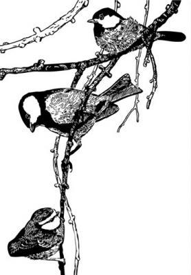 czarno-biale-ptaszki-na-galazce