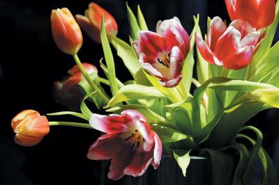 bukiet-tulipanow-3d
