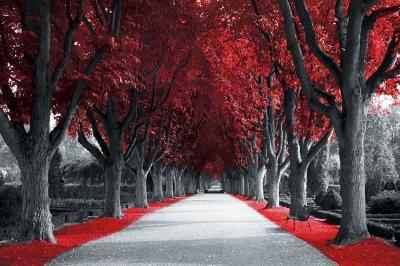 czerwona-aleja-drzew