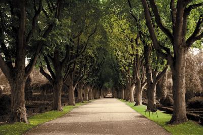 aleja-drzew-w-sepii