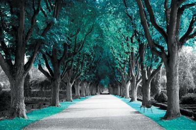 turkusowa-aleja-drzew