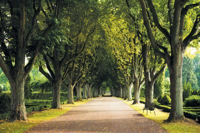 zielona-aleja-drzew