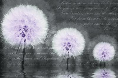 trzy-fioletowe-dmuchawce-i-napis