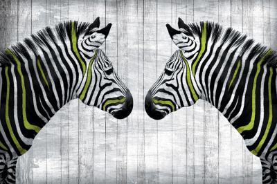 dwie-zebry-na-tle-bialych-desek