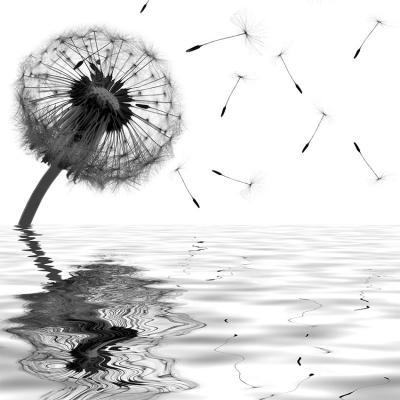 samotny-dmuchawiec-w-wodzie