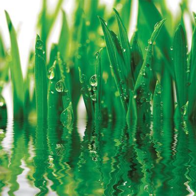 soczyscie-zielona-trawa