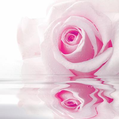 rozowa-roza-w-wodzie