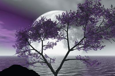 ksiezyc-i-fioletowe-drzewo