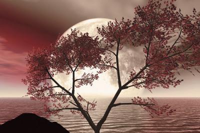 krajobraz-w-sepii-z-drzewem