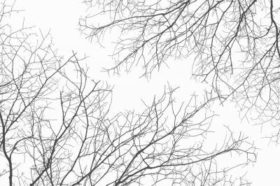 galezie-drzew