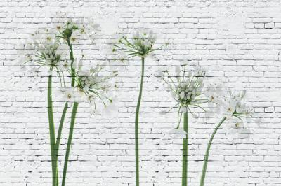 kwiatki-na-cegle