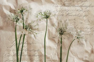 biale-kwiatuszki-i-napisy