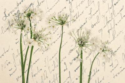 biale-kwiatki-z-napisami