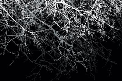biale-drzewo-na-czarnym-tle