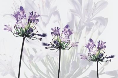 trzy-kwiatki