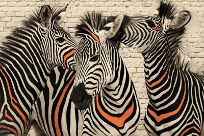 zebry-w-sepii