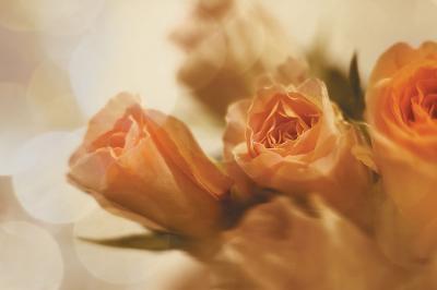 pomaranczowe-roze