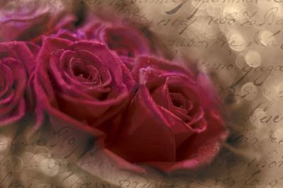 amarantowe-roze