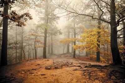 polana-w-lesie