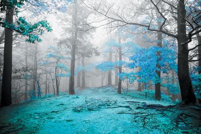 niebieski-las