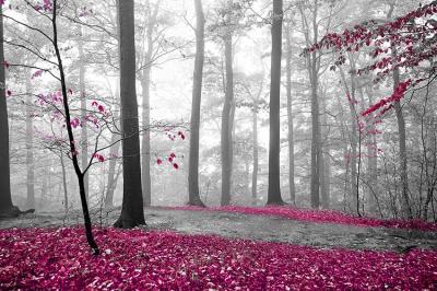 rozowy-las