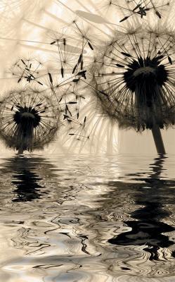dwa-dmuchawce-i-odbicie-w-wodzie