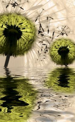 zielone-dmuchawce-i-odbicie-w-wodzie