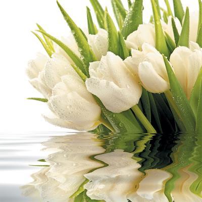 biale-tulipany-i-odbicie-w-wodzie