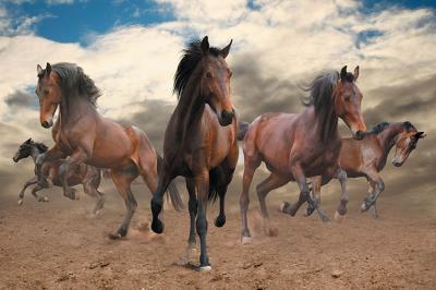 konie-na-pustyni