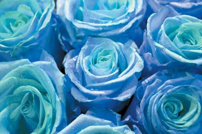 niebieski-bukiet-roz