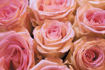 rozowe-kwiaty-rozy