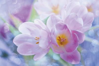 pastelowe-kwiaty