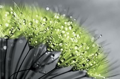 zielone-dmuchawce