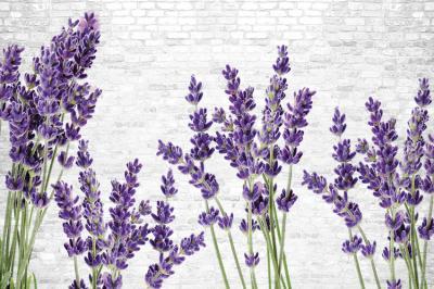 kwiaty-lawendy-na-tle-cegiel