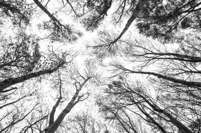 konary-drzew