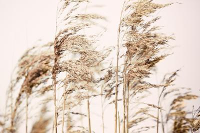 polne-trawy