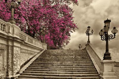 drzewo-i-schody-w-sepii